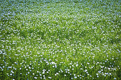Flower Blooms Photograph - Blooming Flax Field by Elena Elisseeva