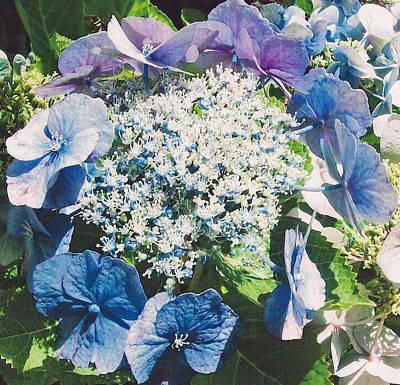 Photograph - Blue Hydrangea by Shan Ungar
