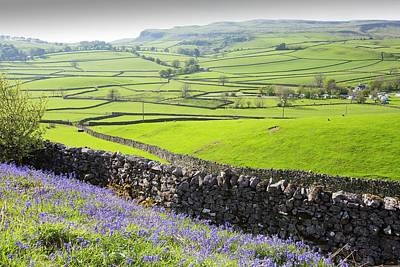 Bluebells Growing On A Limestone Hill Art Print by Ashley Cooper