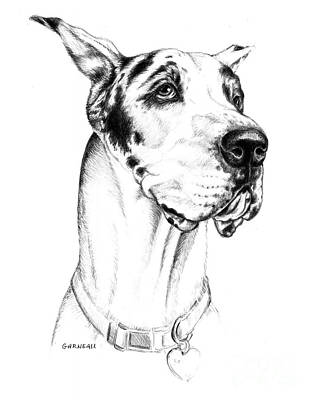 Big Dog Drawing - Bodhi  by Catherine Garneau