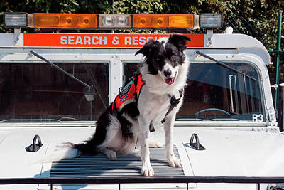 Border Collie Search And Rescue Dog (mr Art Print