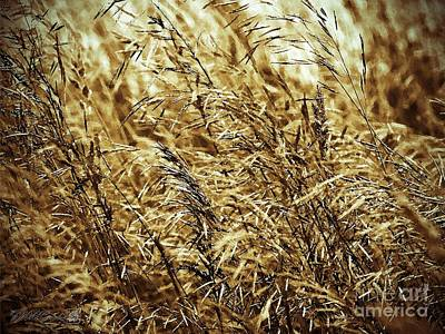 Brome Grass In The Hay Field Art Print by J McCombie