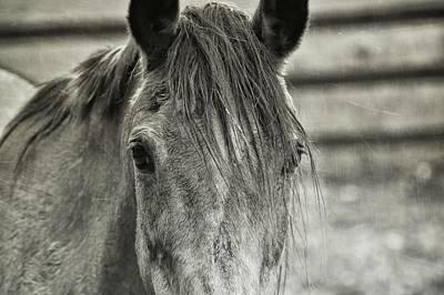 Photograph - Old Buckskin by JAMART Photography