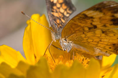Photograph - Butterfly by Byron Jorjorian