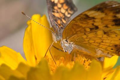 Photograph - Butterfly by Byron Jorjorian