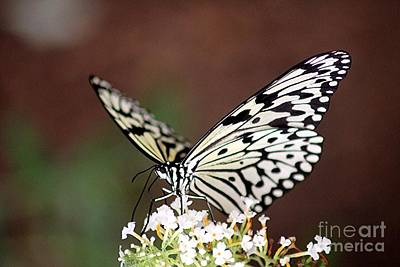 Pasta Al Dente - Butterfly by Diane Greco-Lesser