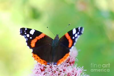 Symbol Photograph - Butterfly by Michal Bednarek