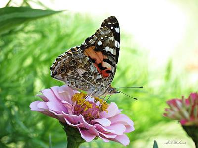 Photograph - Side View Painted Lady Butterfly by MTBobbins Photography