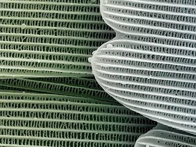 Pomona Photograph - Butterfly Wing Scales by Petr Jan Juracka