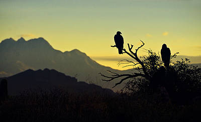 Condor Photograph - By Dawn's Early Light  by Saija  Lehtonen