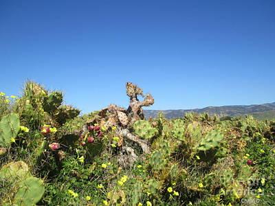 Photograph - Cacti by Chani Demuijlder