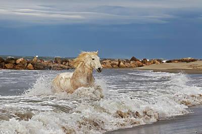 Adam Photograph - Camargue Horse Running Out Of Surf by Adam Jones