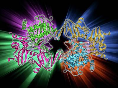 Camp-dependent Protein Kinase Molecule Art Print by Laguna Design