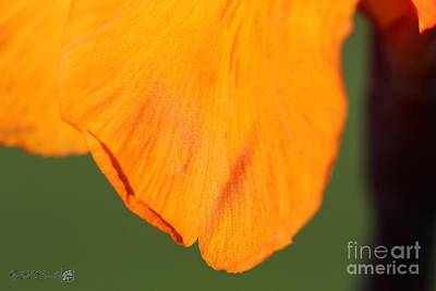 Canna Lily Named Wyoming Art Print by J McCombie