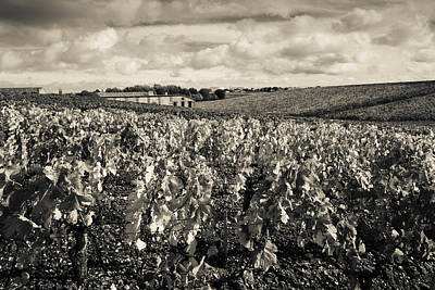 Winemaking Photograph - Chateau Lafite Rothschild Vineyards by Panoramic Images