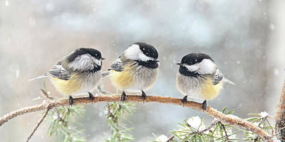 3 Chickadees On A Snowy Day Art Print