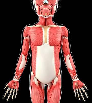 Child's Muscular System Art Print
