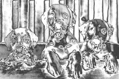Photograph - 3 Chrome Puppies by Belinda Lee