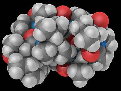 Ciclosporin Drug Molecule Art Print by Laguna Design/science Photo Library