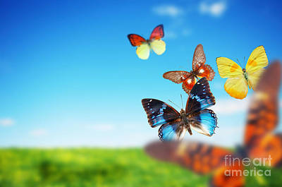 Outside Photograph - Colorful Buttefly Spring Field by Michal Bednarek