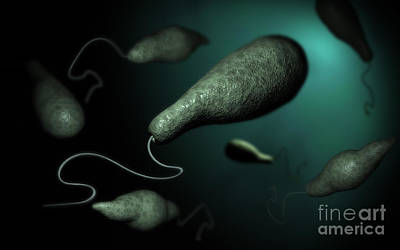 Conceptual Image Of Euglena Print by Stocktrek Images