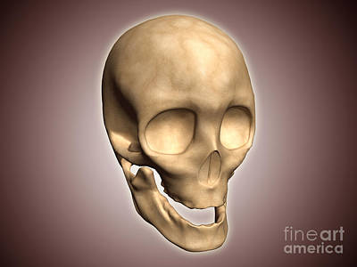 Conceptual Image Of Human Skull Print by Stocktrek Images