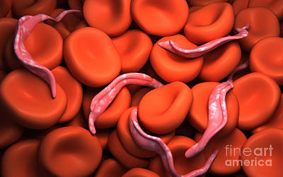 Conceptual Image Of Trypanosoma Art Print