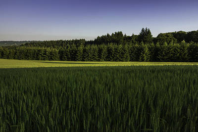 Photograph - Conifer Dr by Jean-Jacques Thebault