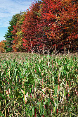 Photograph - Corn Growing In A Field And Autumn by Jenna Szerlag