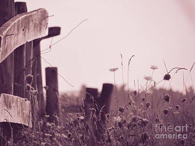 Photograph - Country Style by France Laliberte