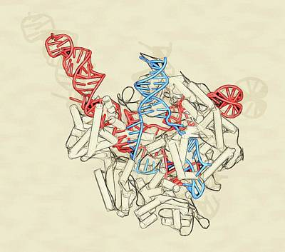 Digitally Generated Image Photograph - Crispr-cas9 Gene Editing Complex by Molekuul