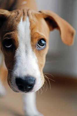 Cute Puppy Portraits Art Print