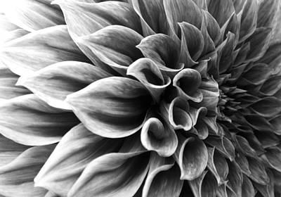 Blossoming Painting - Dahlia Flower by Sumit Mehndiratta