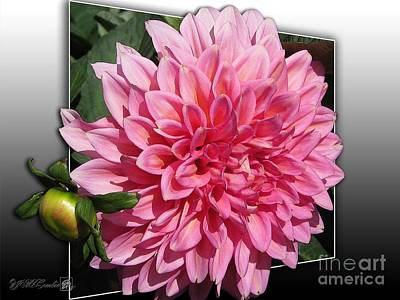 Painting - Dahlia Named Kenora Lisa by J McCombie