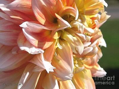 Dahlia Named Peaches-n-cream Print by J McCombie