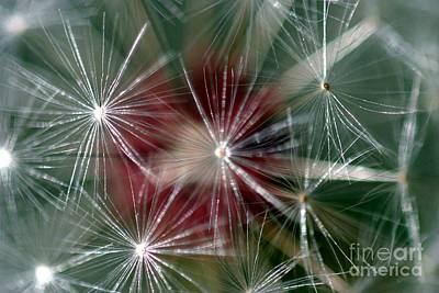 Print featuring the photograph Dandelion Seed Head by Henrik Lehnerer