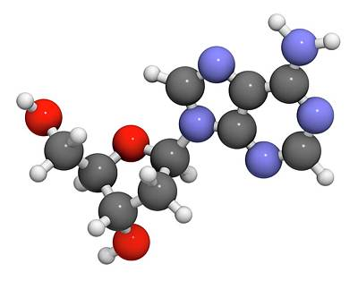 Deoxyadenosine Nucleoside Molecule Art Print