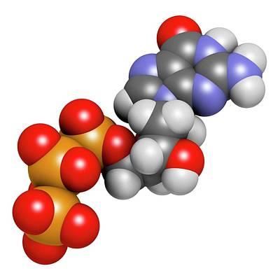 Triphosphate Photograph - Deoxyguanosine Triphosphate Molecule by Molekuul