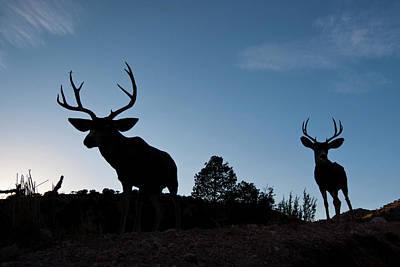 Mule Deer Buck Photograph - Desert Mule Deer (odocoileus Hemionus by Larry Ditto