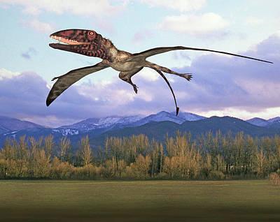 Dimorphodon Pterosaur Art Print by Friedrich Saurer
