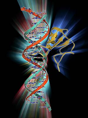 Dna And Mecp2 Complex Art Print by Laguna Design