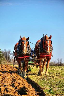 Draft Horses Photograph - Down On The Farm by Dan Sproul