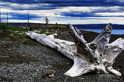 Driftwood On Beach Art Print by Thomas R Fletcher