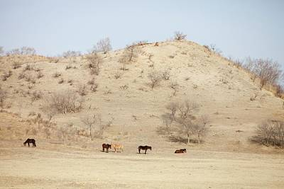 Earth Changes Photograph - Drought by Ashley Cooper