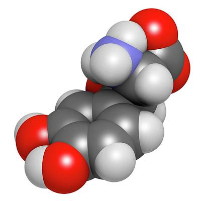 Droxidopa Hypotension Drug Molecule Art Print