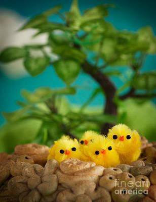 Easter Chicks Art Print by Mythja  Photography