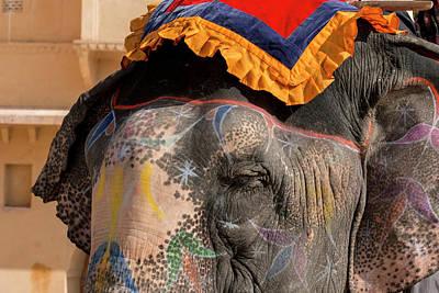 Amer Photograph - Elephants Amber Fort Jaipur Rajasthan by Tom Norring
