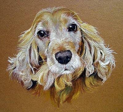 Cocker Spaniel Drawing - English Cocker Spaniel Dog by Olde Time  Mercantile