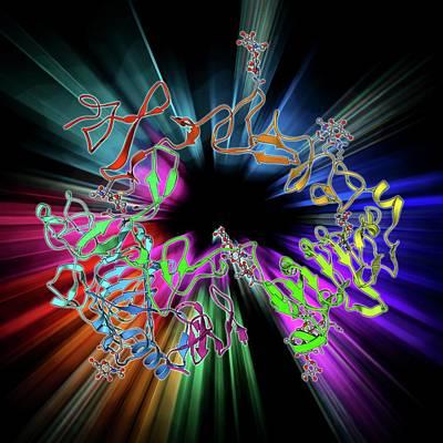 Epidermal Growth Factor And Receptor Art Print by Laguna Design