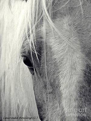 Equine Study Art Print by Laurinda Bowling